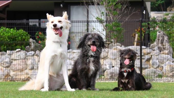 【愛犬同伴プラン】ゆったり広々一棟貸し切りの快適ヴィラでワンちゃんも大満足!!ドッグラン併設
