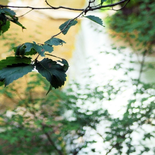 当館となりに流れる清流山田川。美しい景色を望む川側のお部屋