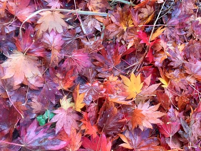 秋の色彩。