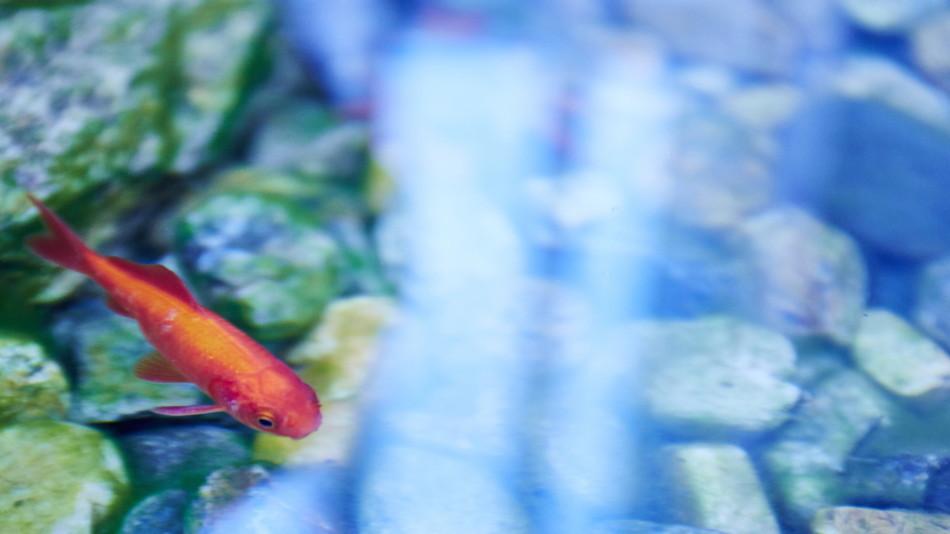 金魚が泳ぐ池も。