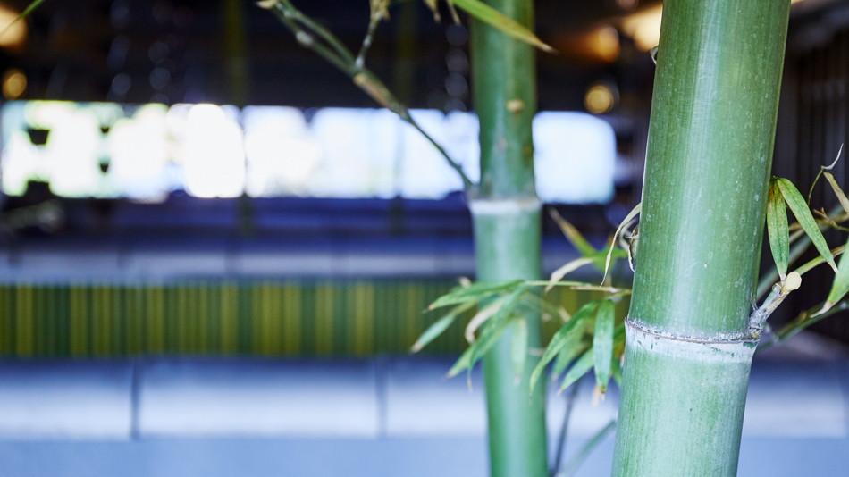 2F共用部の庭園は竹林をモチーフにしています。