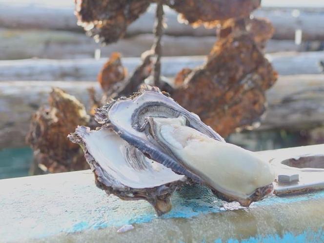 マルテン水産の牡蠣
