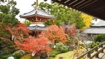 *【景観一例】書院15帖から眺める庭園