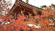 *【秋の多宝塔】朱色の塔と紅葉の競演