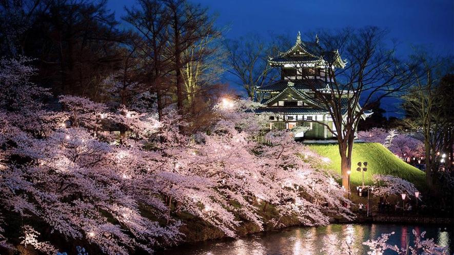 日本3大夜桜 高田公園 観桜会