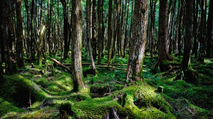 \白駒池周辺の苔の森ツアー付き/【1泊2食】