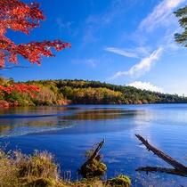 秋の白駒の池
