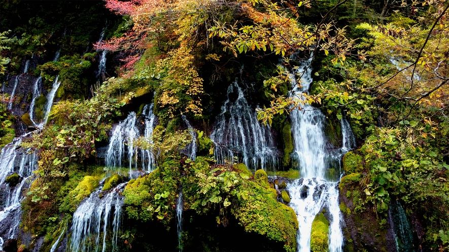 *【周辺観光】吐竜の滝は当館よりお車と徒歩で約25分。遊歩道もありカメラ持参がおすすめです。