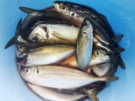 【朝どれ鮮魚を使ったお造りコース】旬のお刺身の5種の盛り合わせ★<2食付き>