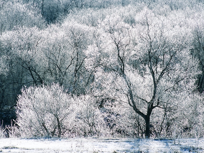 【冬の情景】樹氷を含む様々な霧氷を観ることができます。