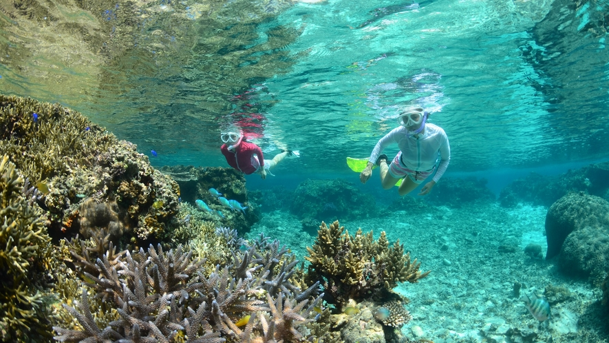 【シュノーケリング】目の前に迫る鮮やかな珊瑚礁と熱帯魚の世界は感動的です