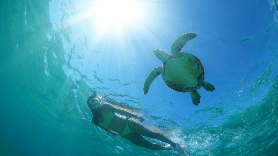 【ウミガメ】シギラビーチで出会えることも