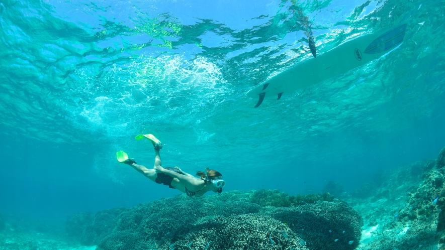 【シュノーケリング】美しい珊瑚やカラフルなお魚をシュノーケルで観察