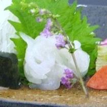 【富山湾に宝石】シロエビ