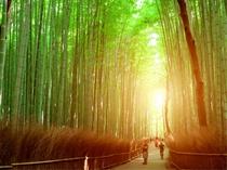 嵐山 竹林(ホテルより徒歩・電車約40分)