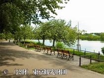 上野恩賜公園・不忍池(ホテルより徒歩14分)