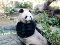 上野動物園(ホテルより徒歩23分