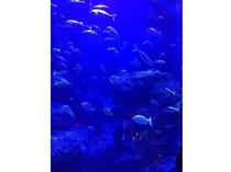 【東京スカイツリータウン・ソラマチ内】すみだ水族館(ホテルより徒歩・電車で25分)