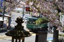 江ノ島電鉄と桜