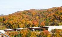 ダイニング【花籠】からの眺め「紅葉シーズン」