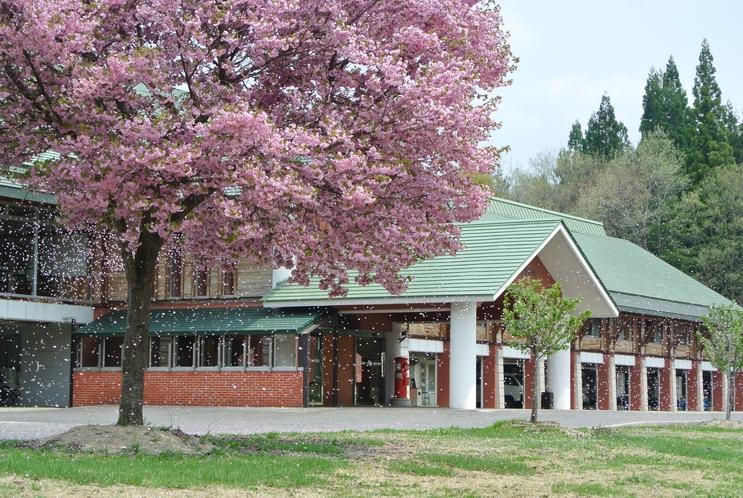 前庭 八重桜