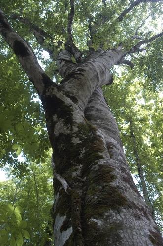 ブナ林「恵みの森」