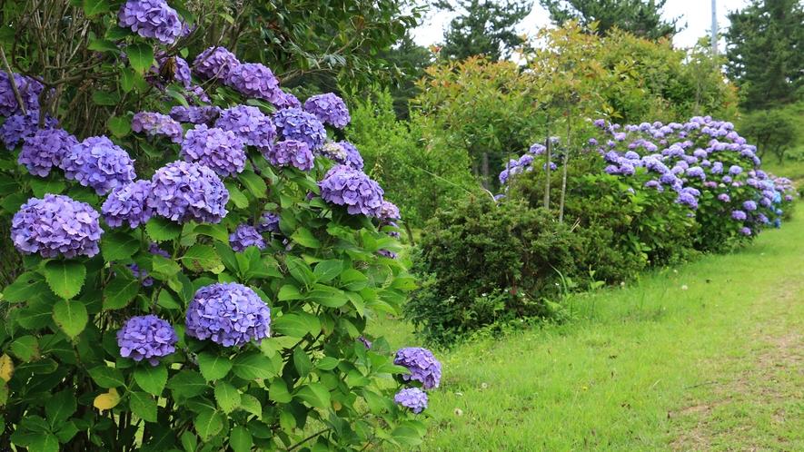 季節で咲く花々を眺めながら散策出来ます。