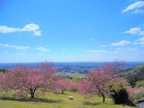 春の愛宕山公園(イメージ)