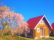 春のスカイロッジ(イメージ)