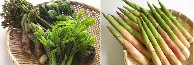 今が旬!根曲がり竹、山菜を採りに行く!◆1泊2食◆