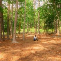 【ワイルドドッグラン(約750㎡)】新たに第6のドッグランが誕生!お散歩コースの途中に寄り道を。