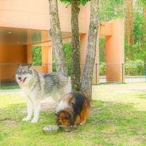 【ウェルカムドッグラン(約200m2)】フェンスはしっかり大型犬でも飛び越えられない高さ。