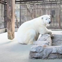 ◆愛媛県立とべ動物園②
