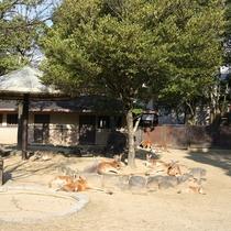 ◆愛媛県立とべ動物園④