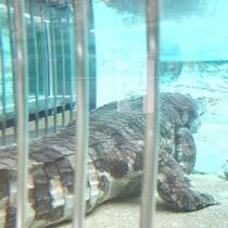 ◆愛媛県立とべ動物園③