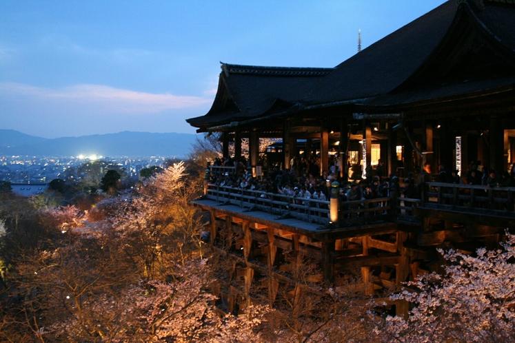 約1,500本の桜が咲き誇る世界遺産「清水寺」