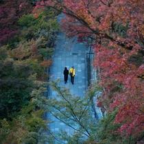 東山周辺の紅葉を秋の京都を散策しながらお愉しみください