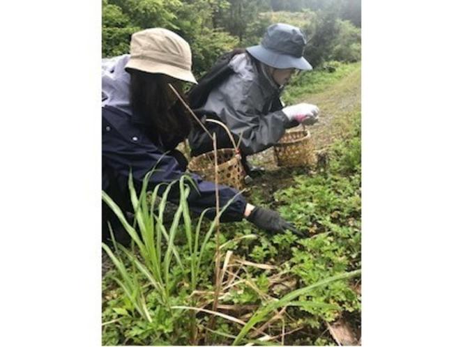 山菜狩りツアー
