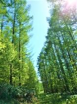 下川町内は緑がいっぱい
