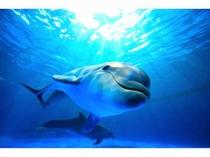【鴨川シーワールド】いつみてもかわいい イルカ