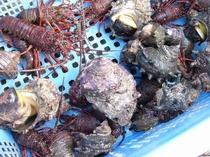 地元の新鮮魚介類!採れたてをお出しします。