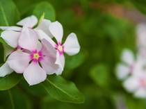 屋我地島に咲く花々