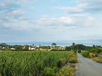 RBvilla 屋我地島で風に揺らぐ、さとうきび畑の風景。