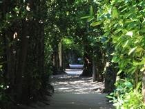【備瀬のフクギ並木】木陰をのんびりと散策するのに最適