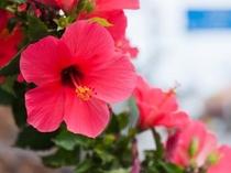 古宇利島に咲く花