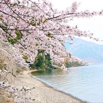 春はさくらの季節。近くには琵琶湖がさくら満開になり、湖上からも桜クルージングなどが楽しめます。