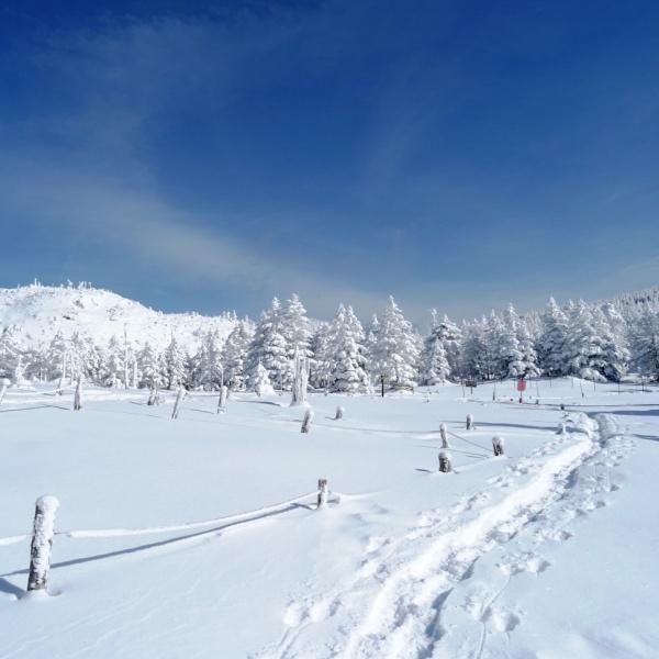 北八ヶ岳でスノーシュー♪大雪原から樹氷の林へ