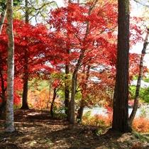 蓼科湖の秋は湖面に映る真っ赤な紅葉が鮮やか!