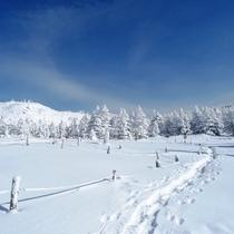 北八ヶ岳でスノーシュー♪大雪原から樹氷の林へ…