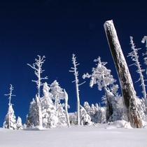 深い青空のもと、北八ヶ岳でスノーシュー♪